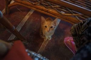 レストランで食事してると猫が料理をじっと見つめてくる