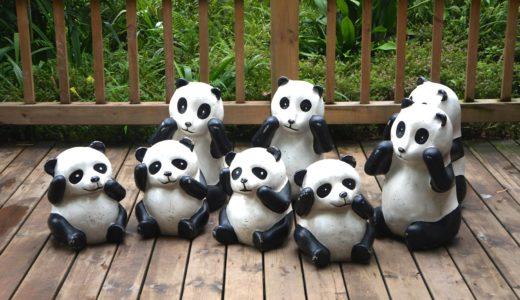 中国四川省で、本場のパンダに会いに行ってきた♡