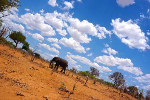 アフリカ チョベ国立公園