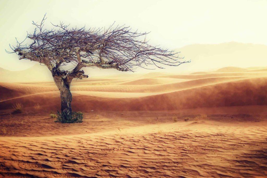 砂漠 desert