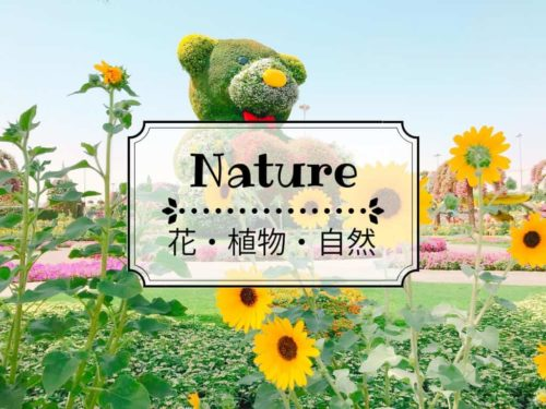 Nature 花 植物 自然