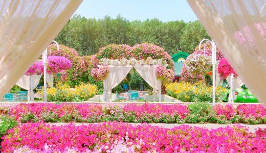 休憩所から見えるお花畑 / ミラクルガーデン / ドバイの写真素材
