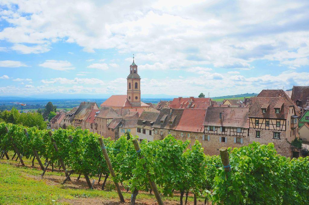 フランス リクヴィルのブドウ畑