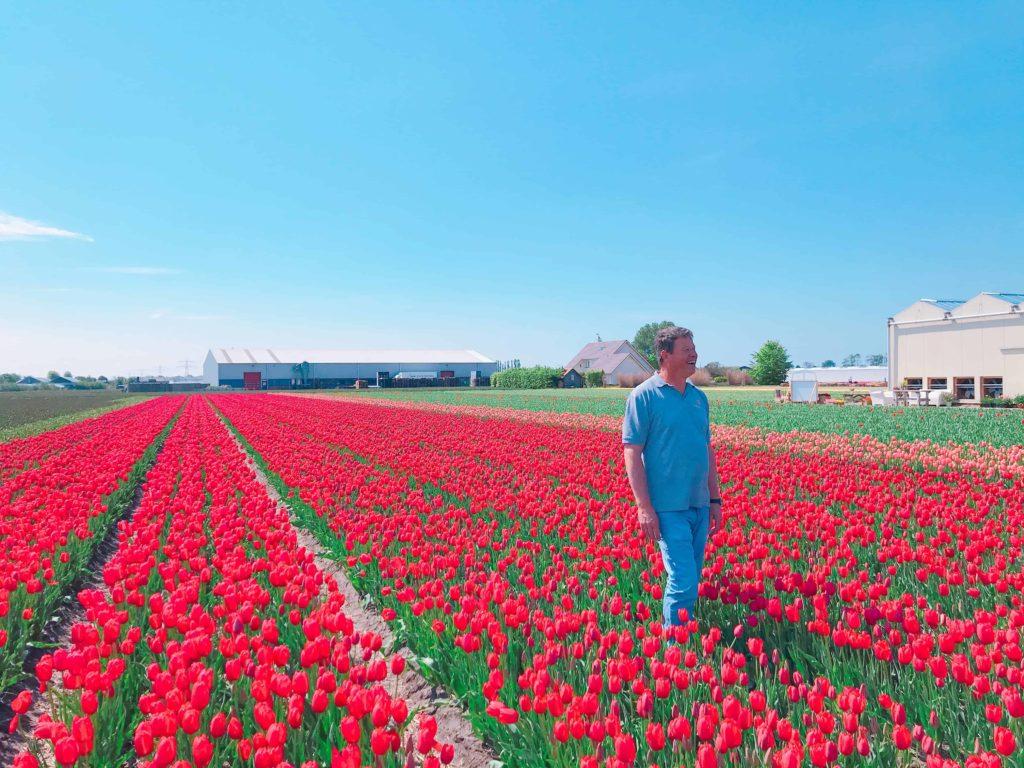 オランダ チューリップ畑 De Tulperij