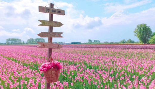 オランダのリッセでおすすめのフラワーファーム2選【海外インスタグラマー御用達】