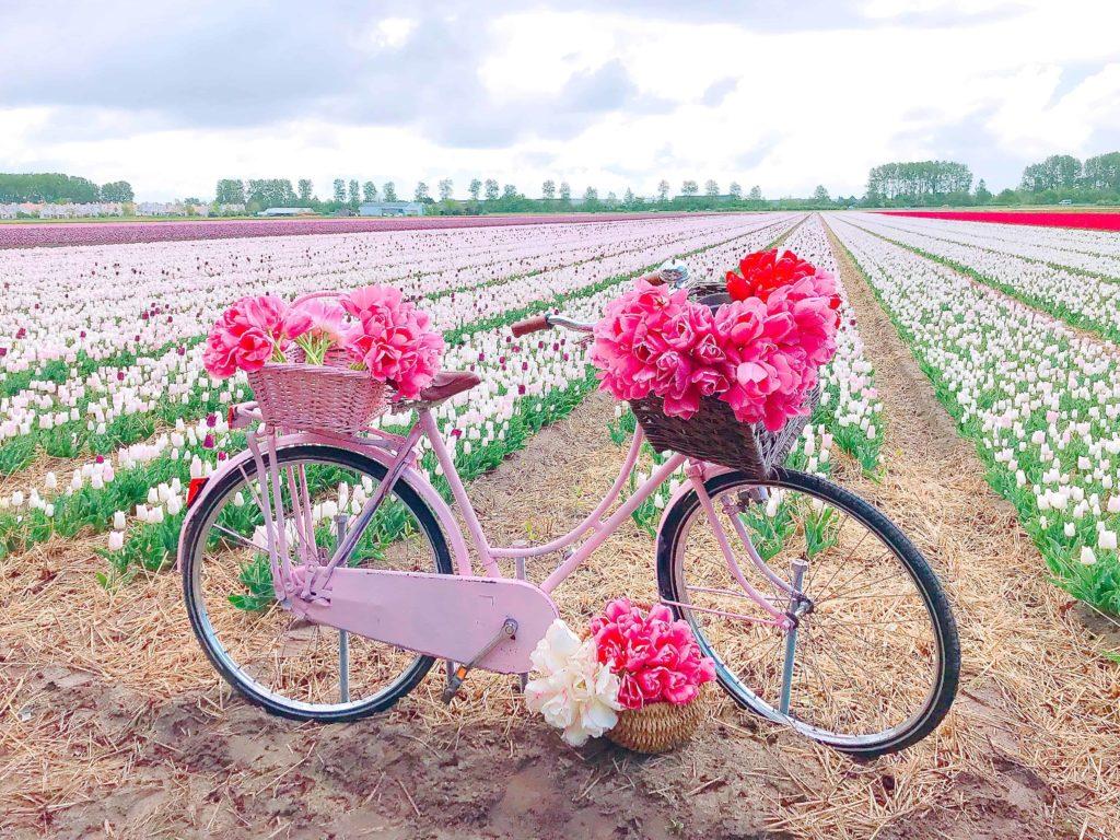 FAM Flower farm フォトスポット